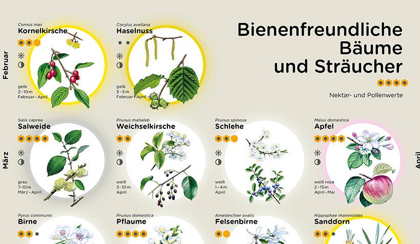"""Poster """"Bienenfreundliche Bäume und Sträucher"""" vom Bienenzentrum OÖ"""