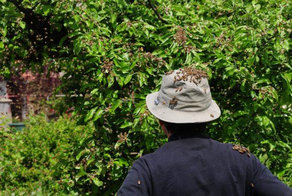 Bienenschwarm im Garten !!  Was tun ??
